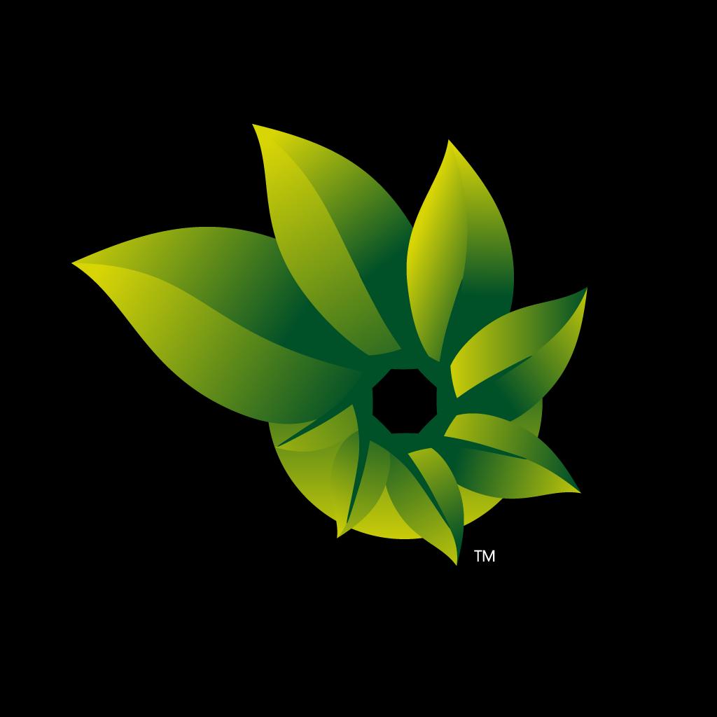 背景 壁纸 花 绿色 绿叶 树叶 植物 桌面 1024_1024